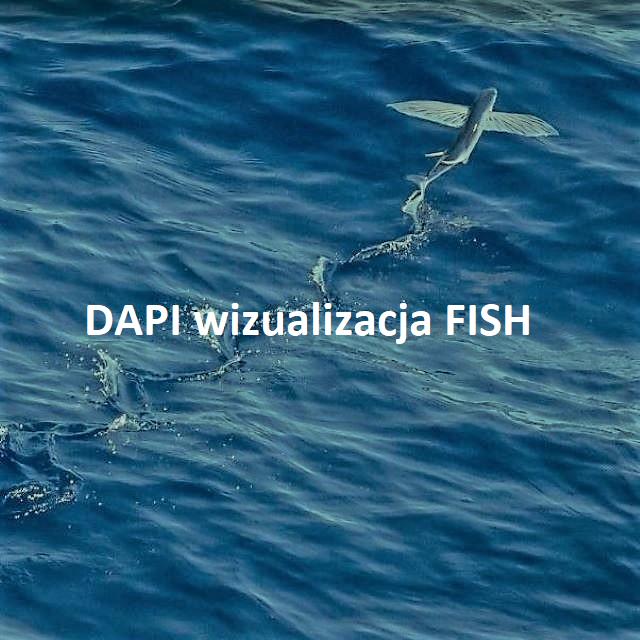 DAPI Counterstain